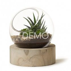 [Sample] Orbit Terrarium - Large