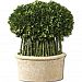 Uttermost Preserved Boxwood Willow Topiary 9 X 15 X 17 Quot HHK0P86SW-0309